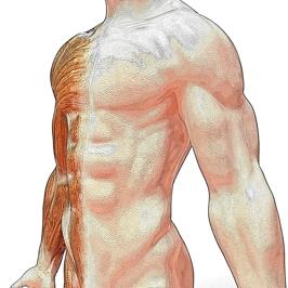De lymfknopen liggen dichtbij organen en worden ook wel klieren genoemd.
